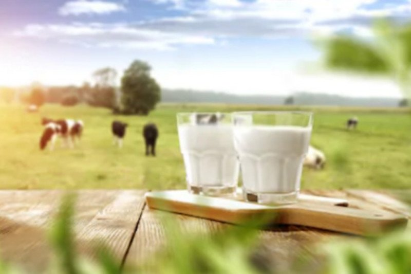 Benarkah susu tinggi lemak sebabkan penuaan dini?