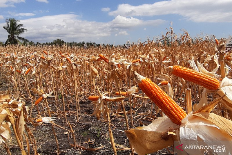 Pemkab Gumas siapkan komoditas unggulan di bidang pertanian dan pariwisata