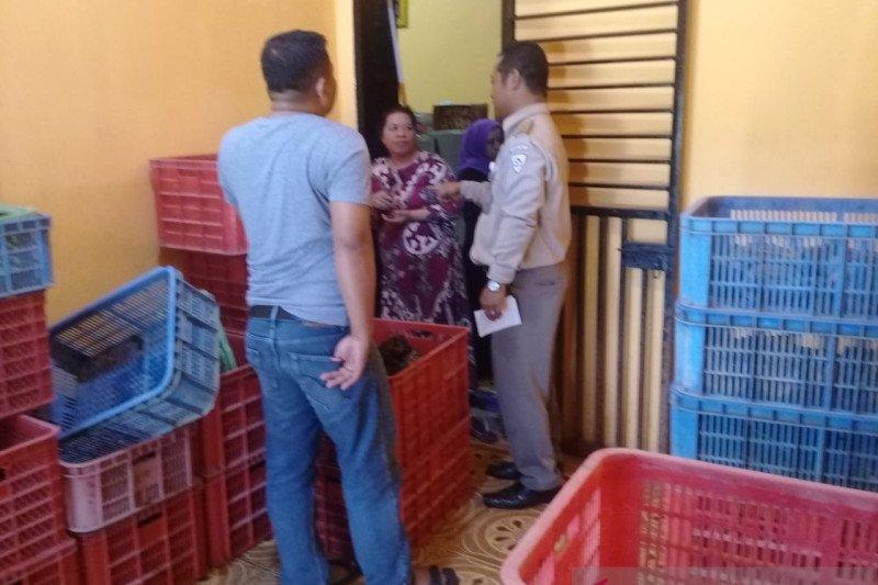 Kementerian KP awasi terhadap pemanfaatan kepiting bakau di Palu