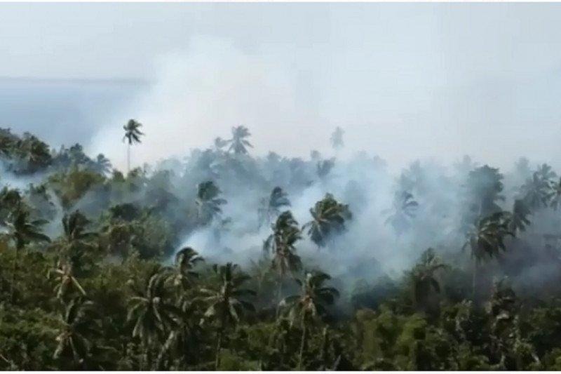 Sekitar 100 hektare areal perkebunan Warembungan-Minahasa terbakar