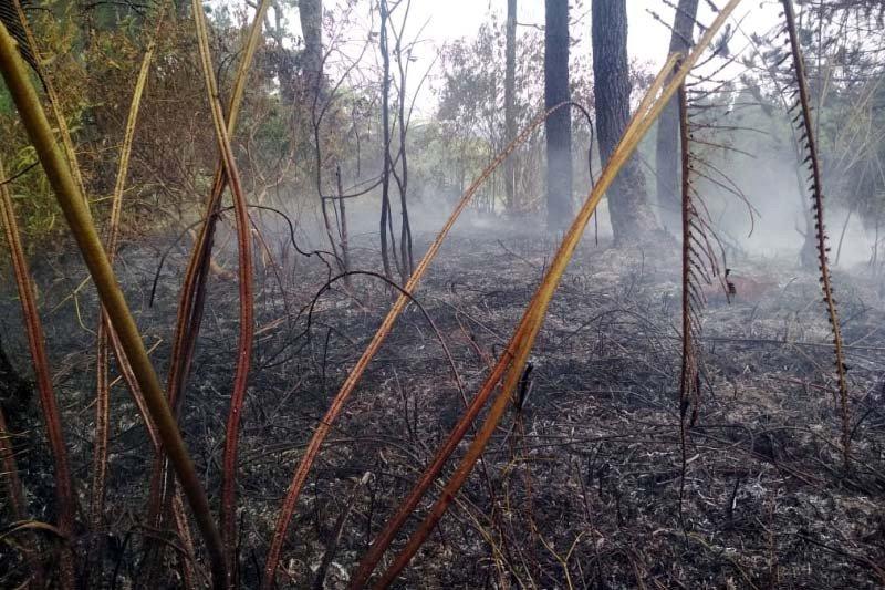 Kebakaran hutan di lereng Gunung Slamet berhasil dikendalikan