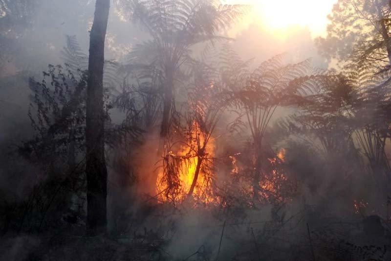 Kebakaran hutan Gunung Slamet seluas 14,3 hektare