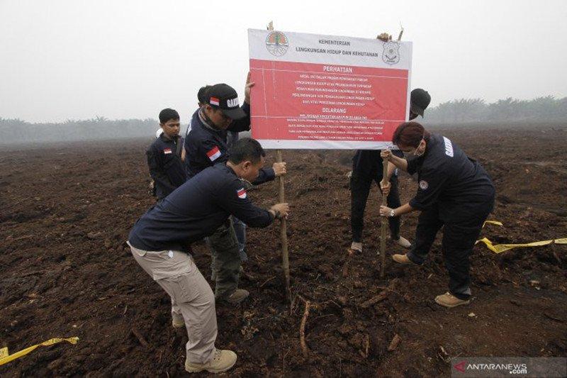 10 konsesi perusahaan diduga penyebab karhutla Riau disegel