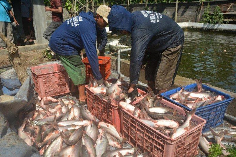 Pemprov Sumsel dorong peningkatan  produksi ikan patin