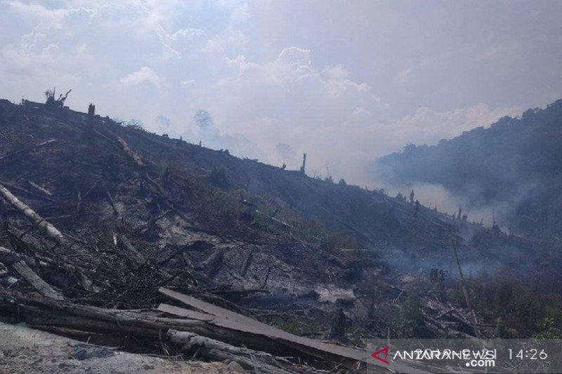 Hutan di Dataran Palolo Sigi terbakar
