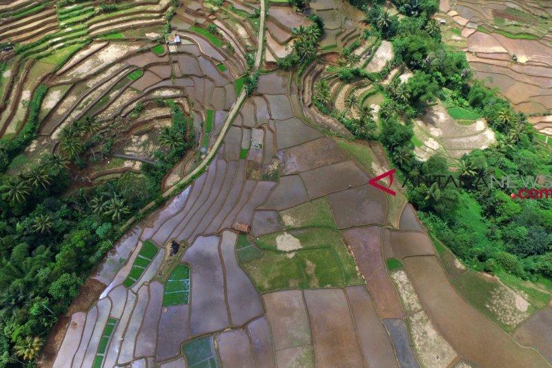 RUU Budi Daya Pertanian  diharapkan tambah jumlah petani