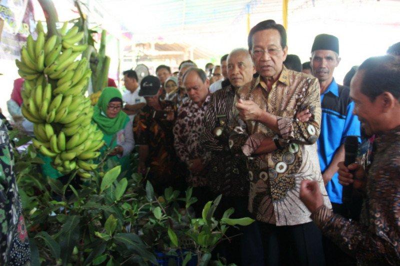 Sultan minta petani organik harus bangun jaringan pemasaran