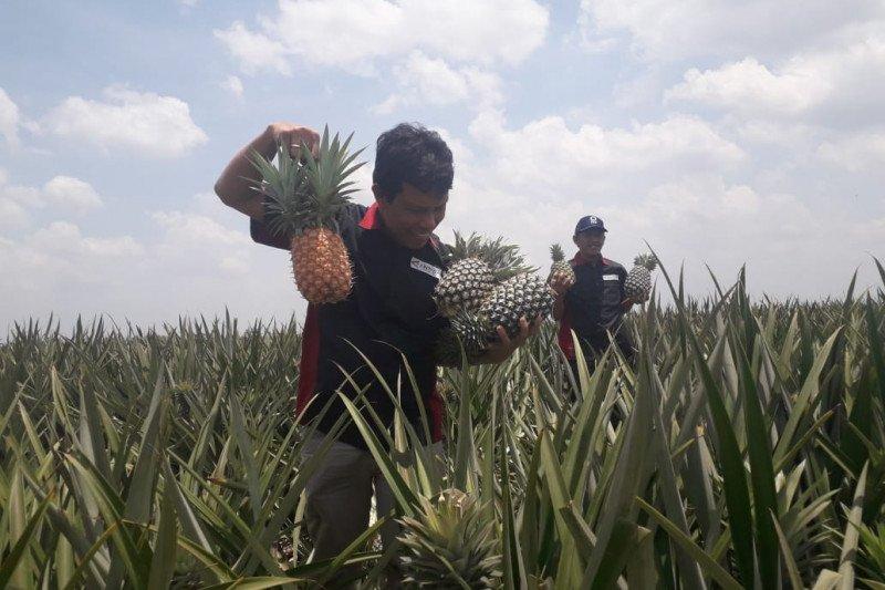 PT GGP ekspor buah segar ke 60 negara