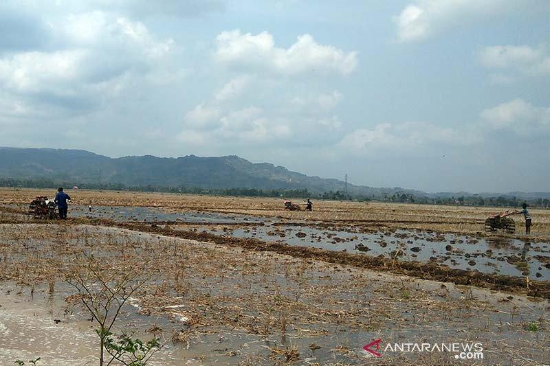 Petani di Banyumas diimbau percepat persiapan tanam padi
