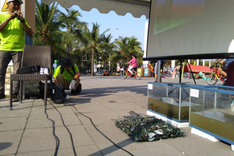 Kerang Hijau jadi 'senjata' alami jernihkan Teluk Jakarta