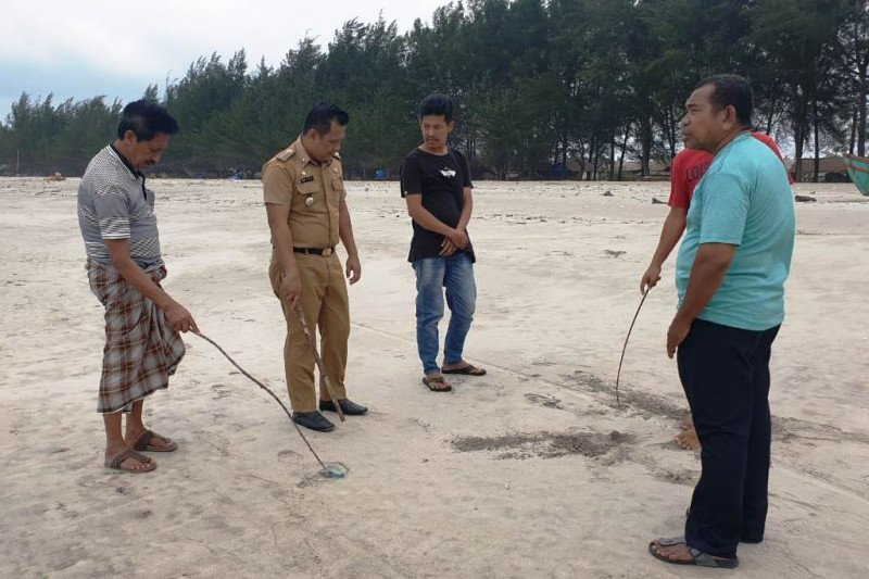 Ratusan Ubur-ubur terdampar di Pantai Tiku Agam, 10 Pengunjung Terkena Sengat