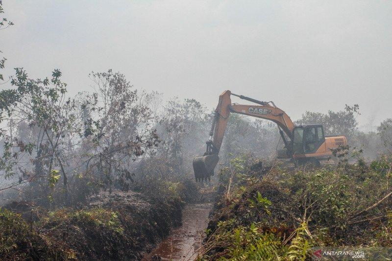Menelisik 78 persen hutan Riau yang dikuasai korporasi