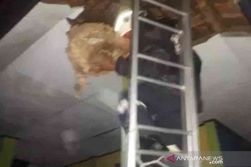 Damkar Yogyakarta menangani 121 evakuasi sarang tawon