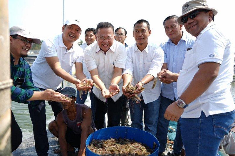 PTPN IX panen raya udang vaname 10 hektare di Pemalang