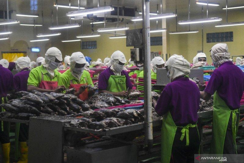 KKP menyebut peluang investasi di sektor perikanan semakin luas
