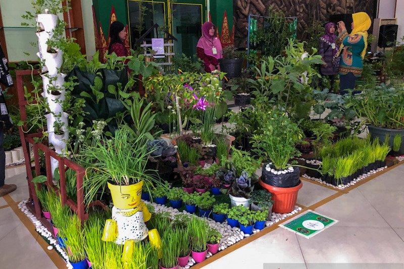 Lorong Sayur dan Lele Cendol dikembangkan mendukung ketahanan pangan