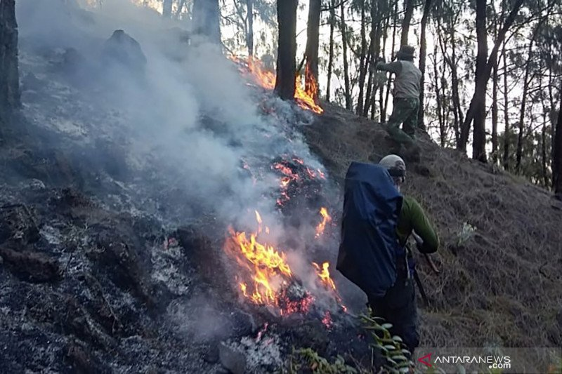 Area terdampak kebakaran hutan Gunung Arjuno seluasi 3.000 hektare