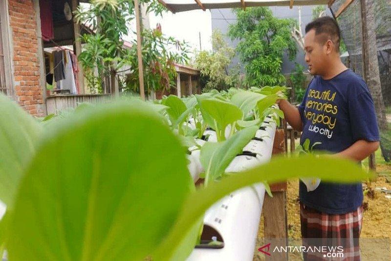 Petani  Kendari mampu produksi sayur hidroponik