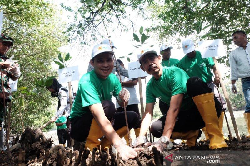 PLN UIW Sulselrabar gandeng IKMP tanam 1.500 bibit pohon