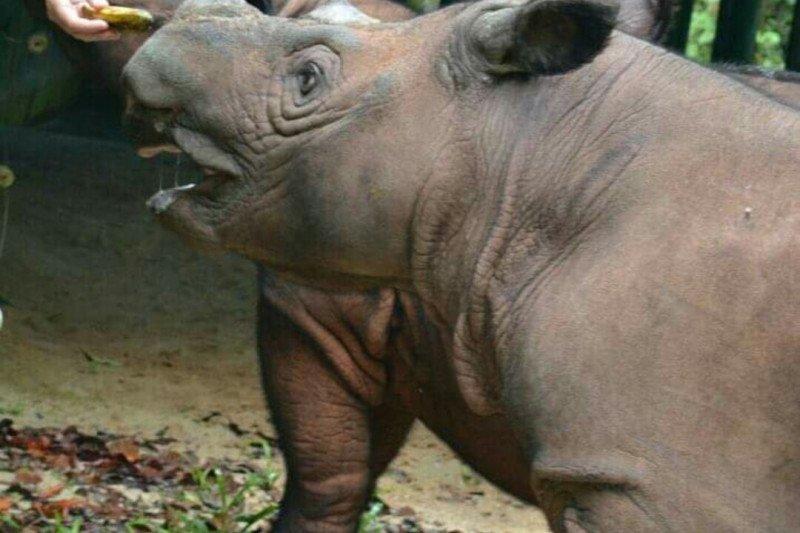 Taman Nasional Way Kambas paling banyak menyimpan badak sumatera