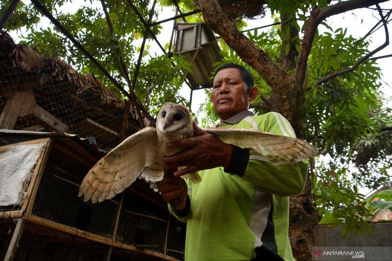 Populasi burung hantu ditingkatkan