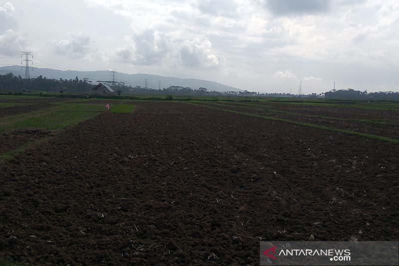 Masa tanam padi di sebagian wilayah Cilacap mundur