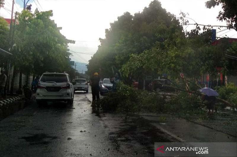 Antisipasi pohon tumbang dengan pemangkasan berkala