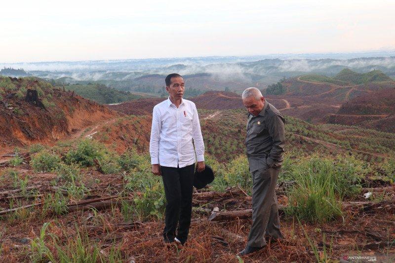 Presiden Jokowi tinjau lokasi ibu kota baru di kawasan konsesi HPH