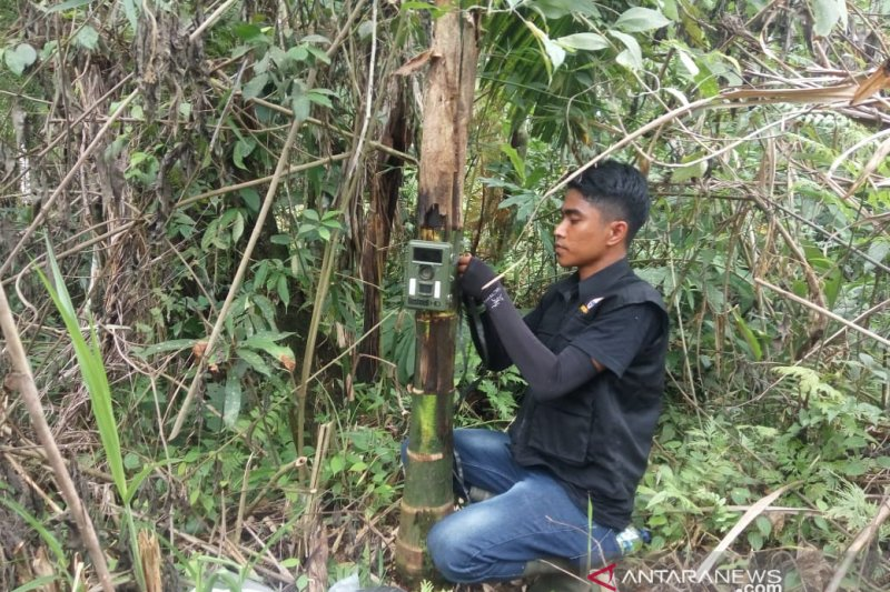 BKSDA Pasang Kamera Trap Pantau Satwa Dilindungi di Kebun Warga