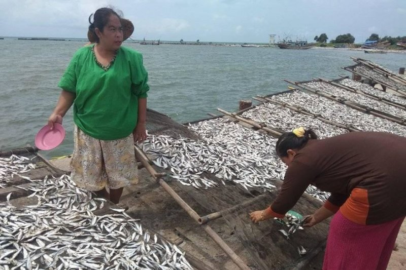 Aktivitas nelayan kembali normal pasca-tsunami