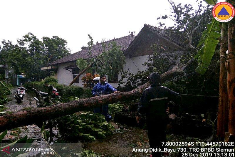 Walhi sebut pohon tumbang timpa pengguna jalan kelalaian pemerintah
