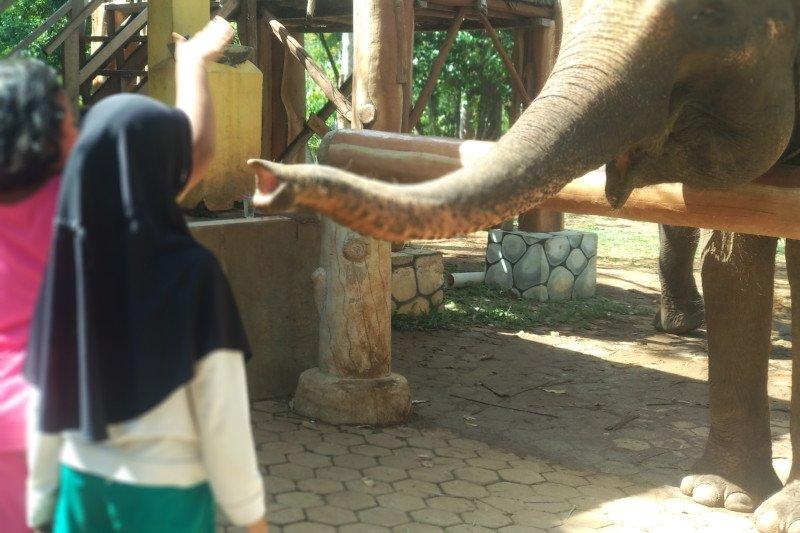 Taman satwa Lembah Hijau siapkan fasilitas tambahan dan hiburan