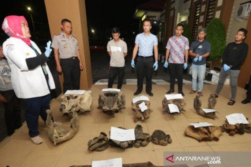 Polisi selidiki penemuan lima bangkai gajah di Aceh Jaya