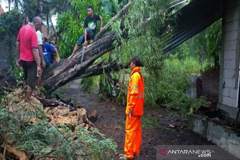 BPBD: Belasan pohon tumbang di Kulon Progo