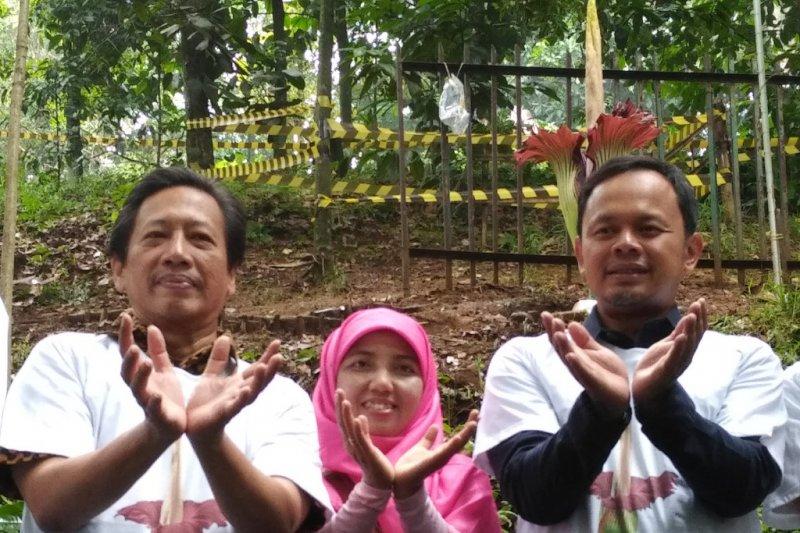Wali Kota Bogor melihat bunga bangkai yang sedang mekar penuh di Kebun Raya Bogor