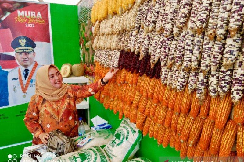 Kabupaten Musi Banyuasin kembangkan  varietas jagung ketan