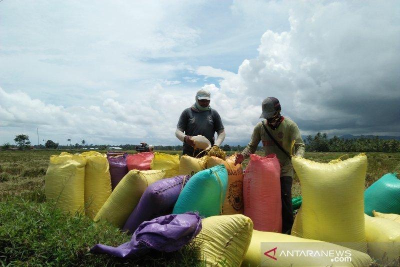 Parimo bertekad jadi lumbung pangan nasional dukung ibu kota baru NKRI