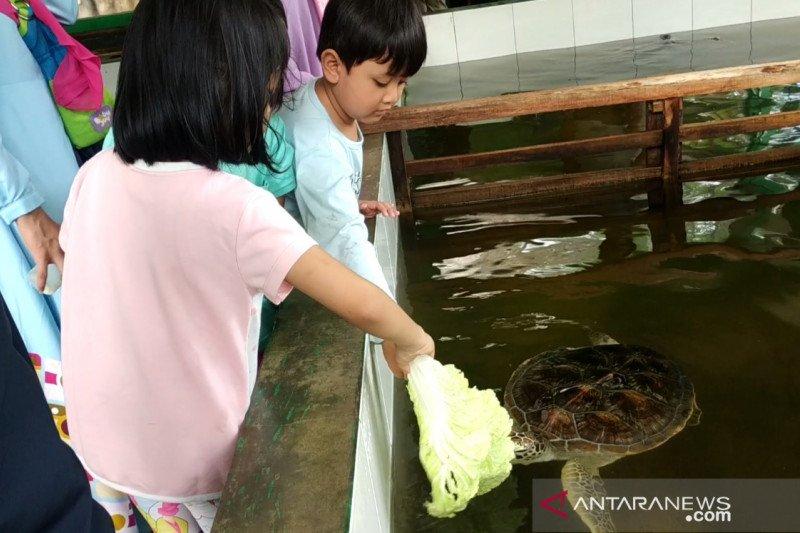 Wisata edukasi penangkaran penyu hijau di Pantai Pangumbahan Kabupaten Sukabumi