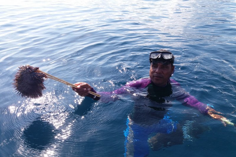 Bintang laut berduri hama dan ancaman bagi terumbu karang Raja Ampat