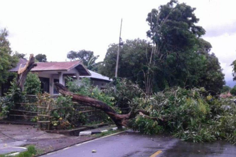 78 kali gangguan listrik di NTT akibat pohon tumbang