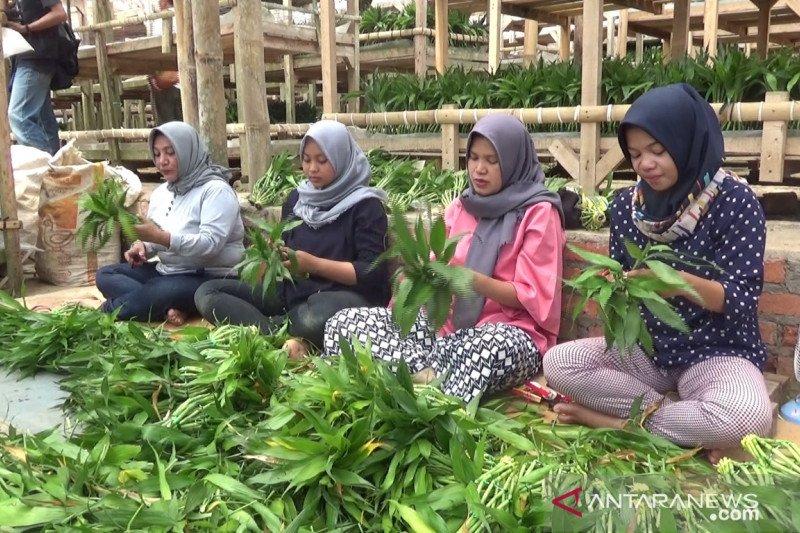 Permintaan tanaman potong dari Sukabumi untuk diekspor meningkat
