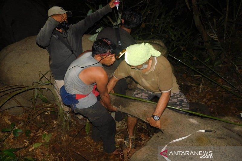 Tim gabungan selamatkan anak gajah liar dari jerat di hutan tanaman industri Riau