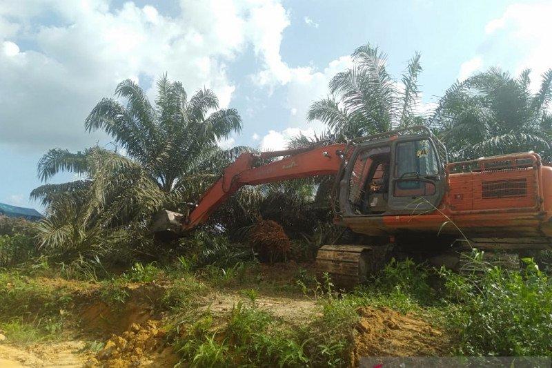 Petani gugat perdata DLHK Riau eksekusi ribuan hektare sawit Pelalawan