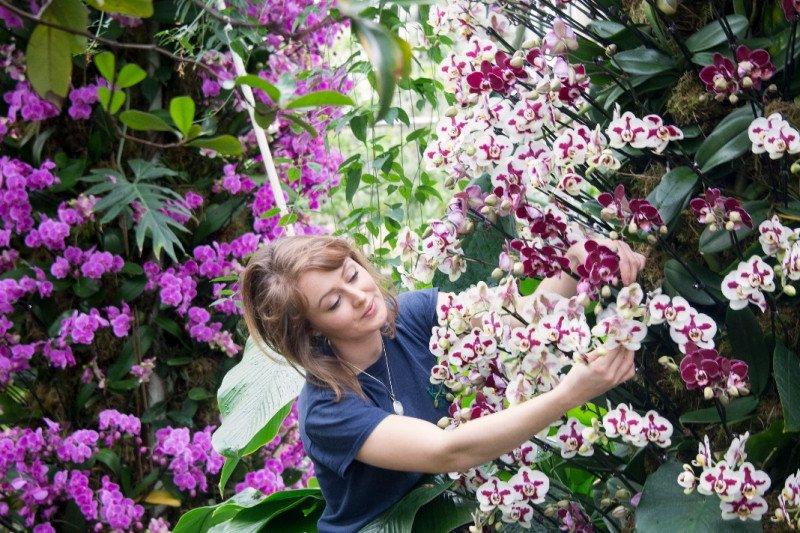 Kebun Raya Kew Garden London gelar Festival Anggrek Indonesia