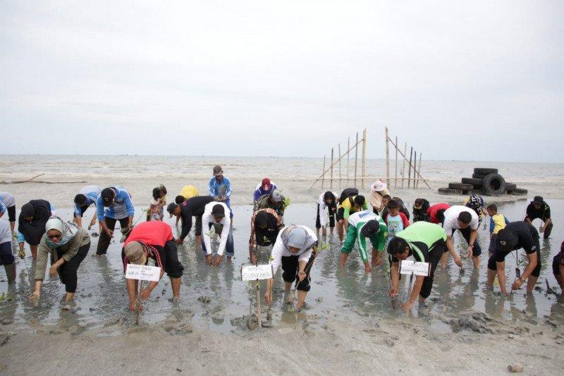 Wagub Lampung lakukan penanaman ratusan pohon mangrove di Pantai Mutiara Baru