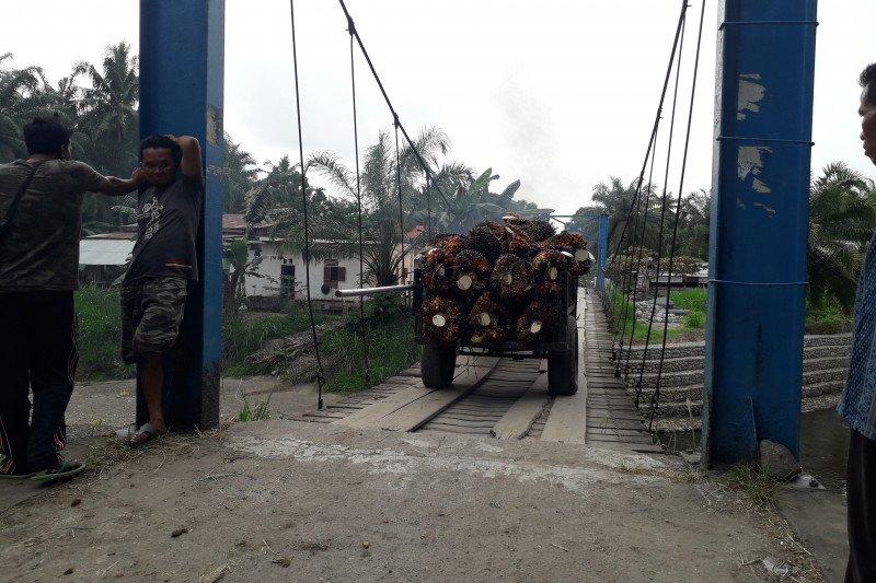 Berusia belasan tahun, warga Mahakarya Pasaman Barat berharap jembatan gantung diperbaiki (Video)