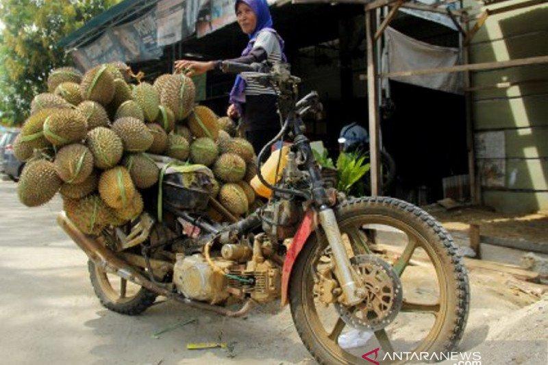 Musim durian di Mamuju