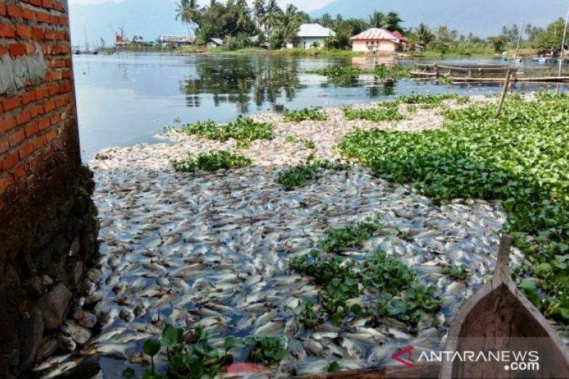 Update - Berat total ikan  mati di Danau Maninjau capai 63 ton
