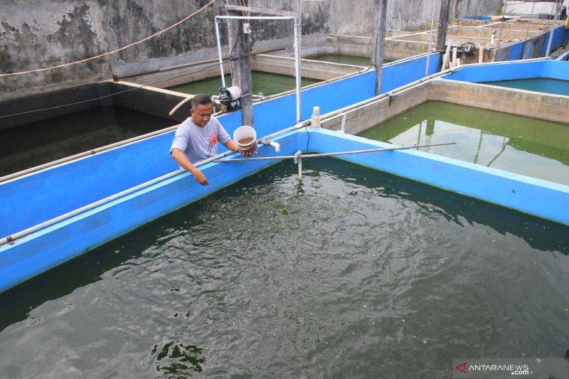 Muara Belida, Muara Enim akan dijadikan budidaya ikan