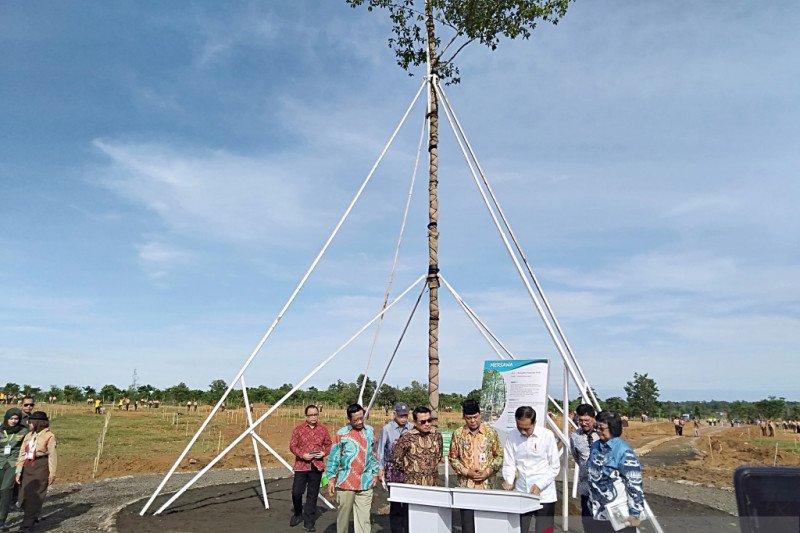 HPN 2020: hutan pers, Presiden Jokowi tanam pohon Marsawa berusia 16 tahun